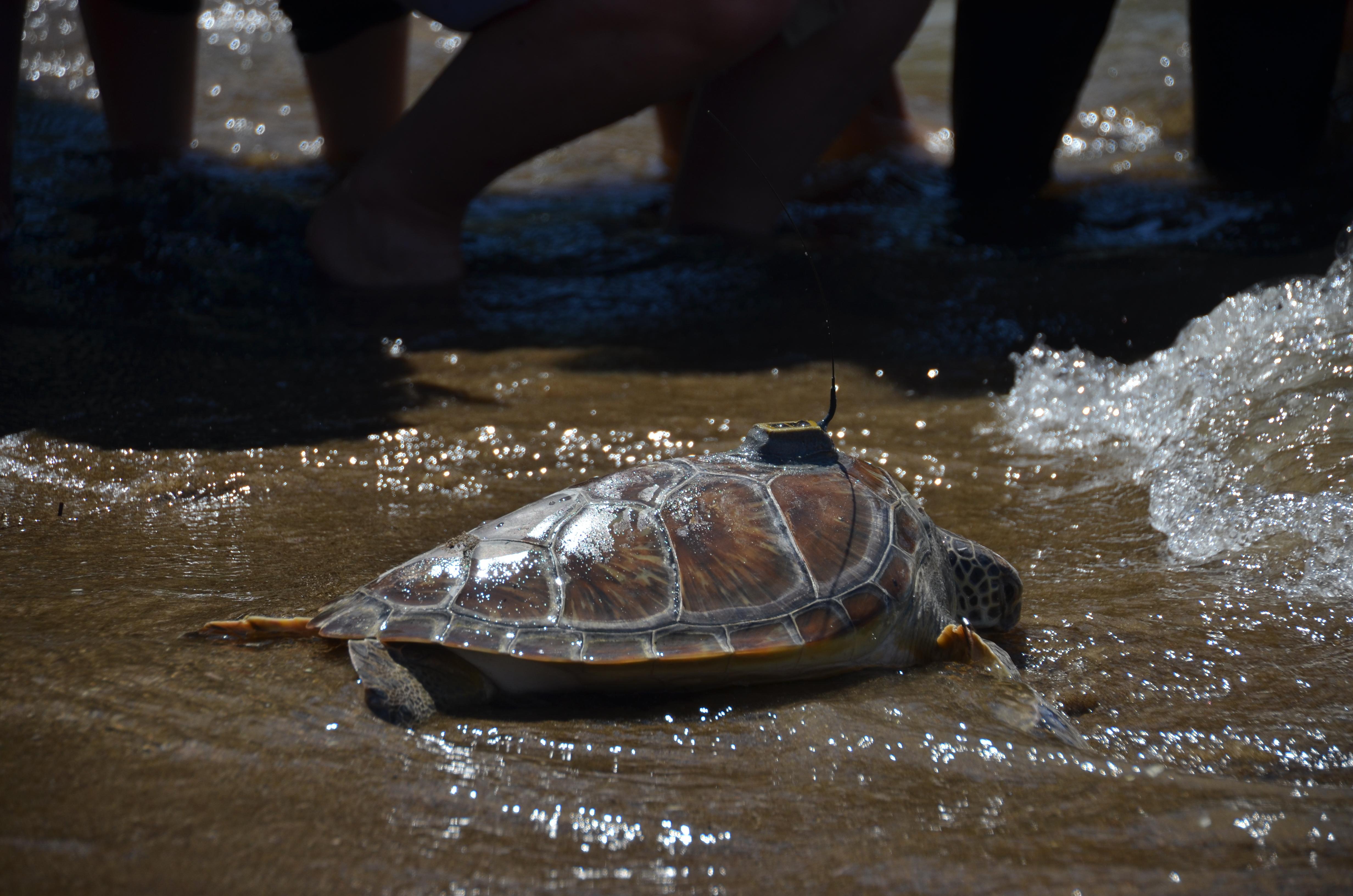 Meeresschildkrötenschutz im türkischen Dalyan